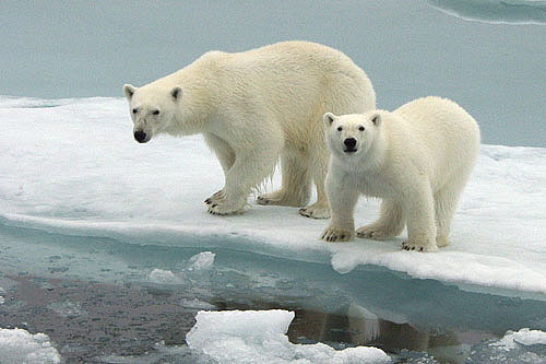 image-ours-ourses-glace-fanfan