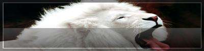 http://img23.xooimage.com/files/c/6/6/firma-leon-9-18f8f01.jpg
