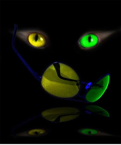 chat-yeux-vert-jaune-flora